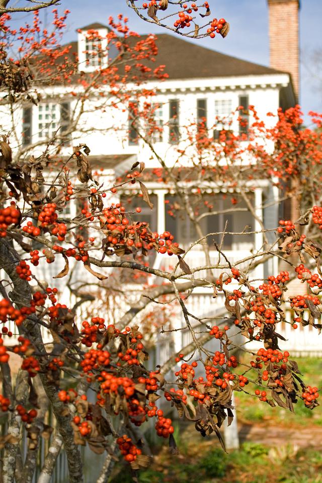 Christmas berry Colonial Williamsburg via foobella.blogspot.com